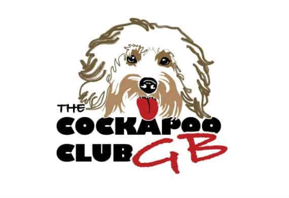 Cockapoo Club Chat